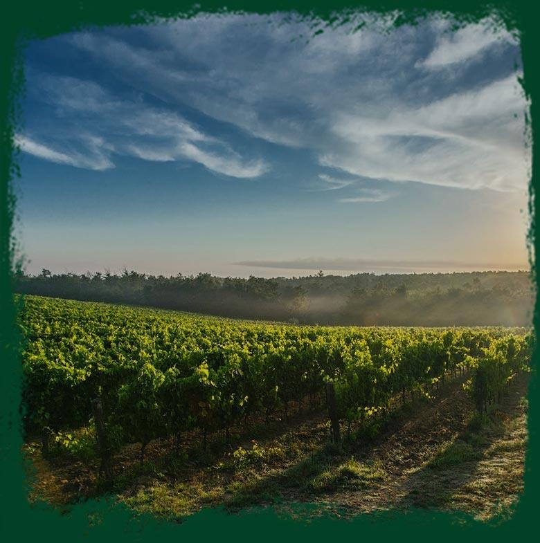 wine3-home-pic1
