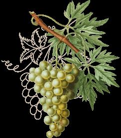 wine3-wines-icon1