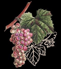 wine3-wines-icon4